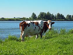 Actuele rekenmodule waarde going concern agrarische sector